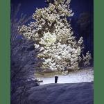 Āra gaismeklis E27 PAR38 SPOTLIGHT, koku un fasādes izgaismošanai, IP44
