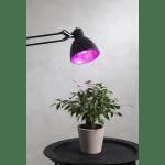 LED augu audzēšanas spuldze E27, A60, 6,5W, 200lm, 1300K, sarkani-violeta gaisma